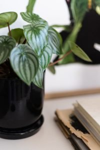 Interior styling for small spaces: small plants