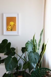 Interior styling for small spaces: large plants
